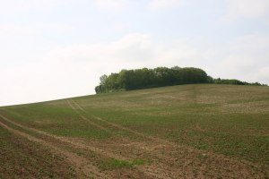The hilltop near Ashingdon where the battle may have taken place